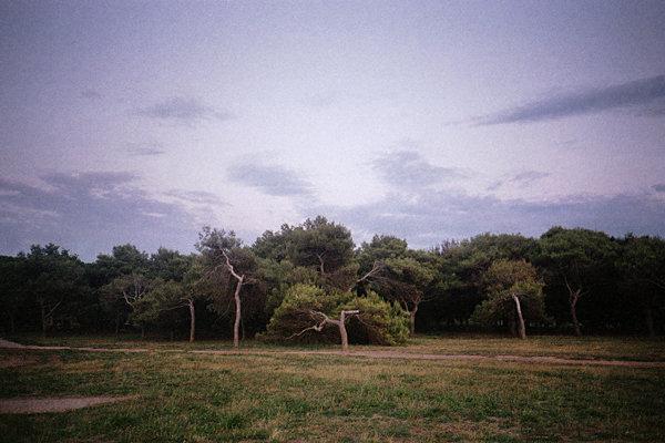 trees-wb.jpg