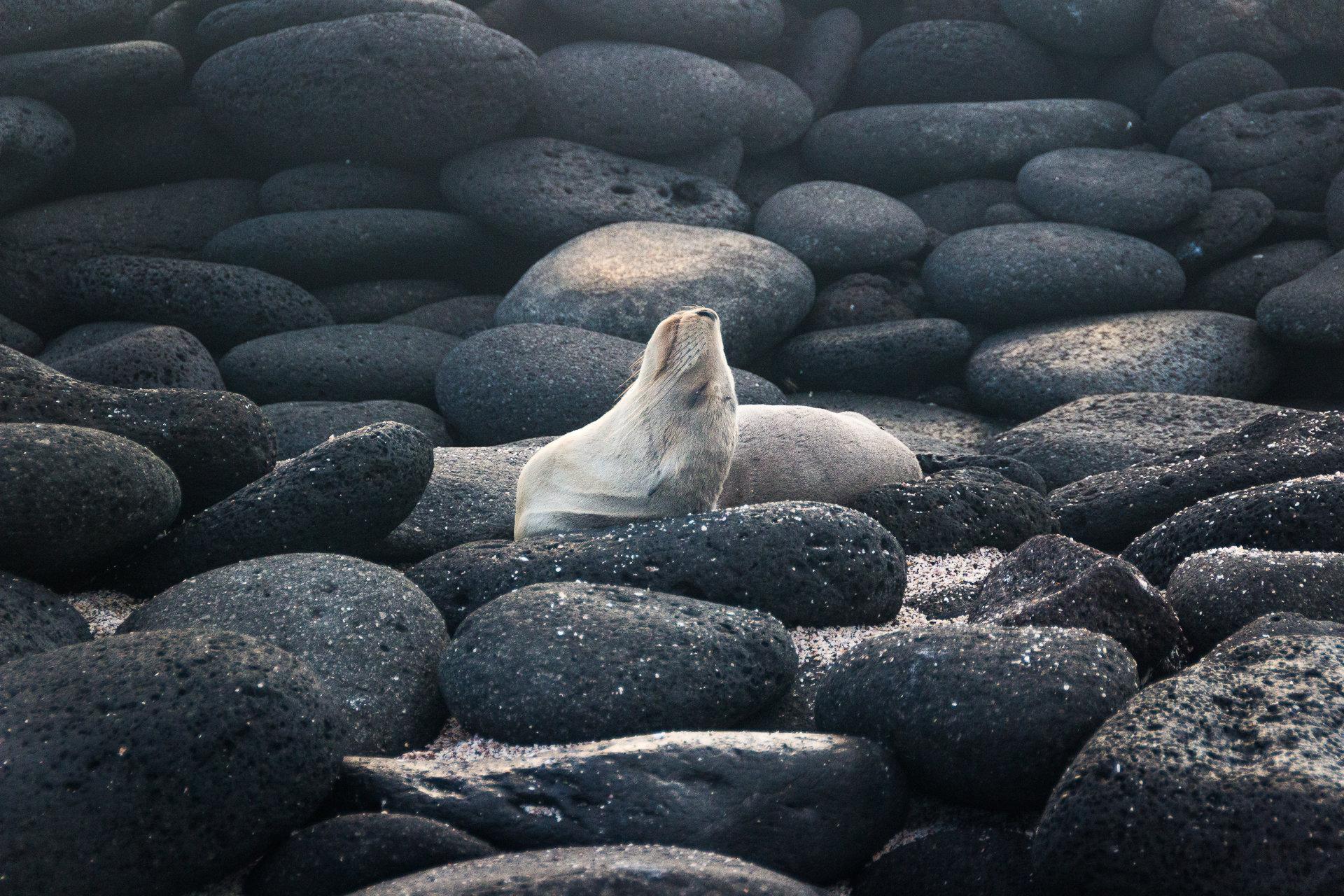 150418_Galapagos-1101.jpg