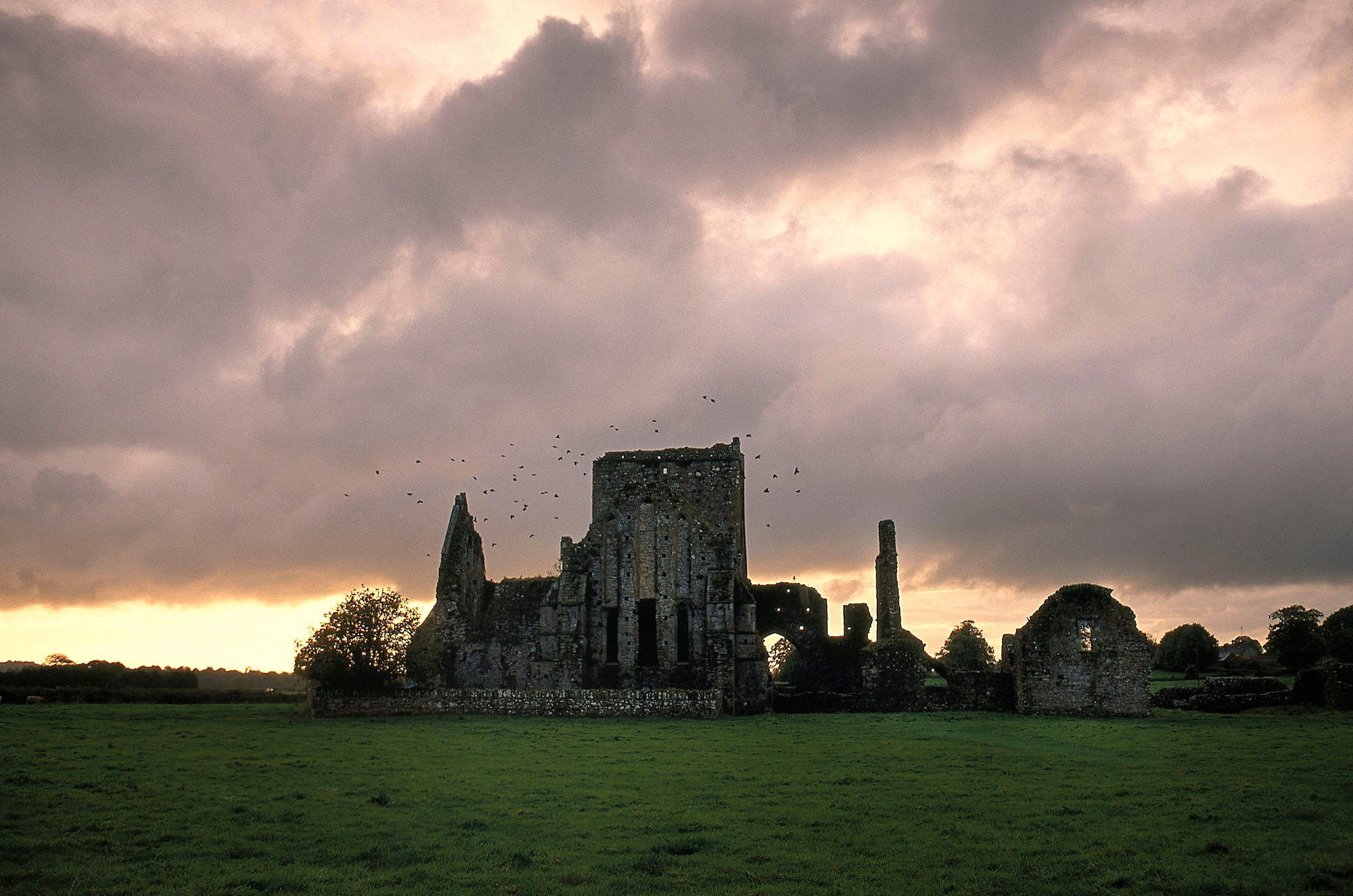 Shore abbey,Cashel,Tipperary