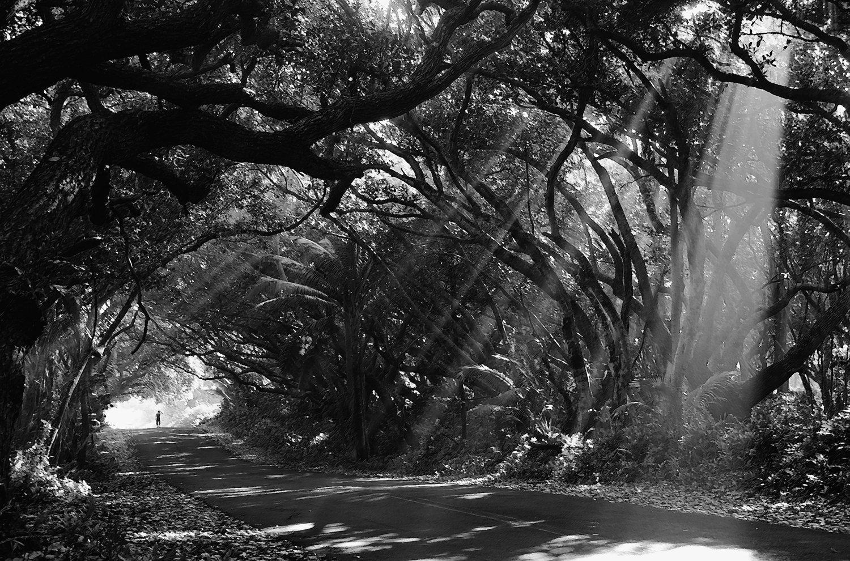 Tree-02bw.jpg