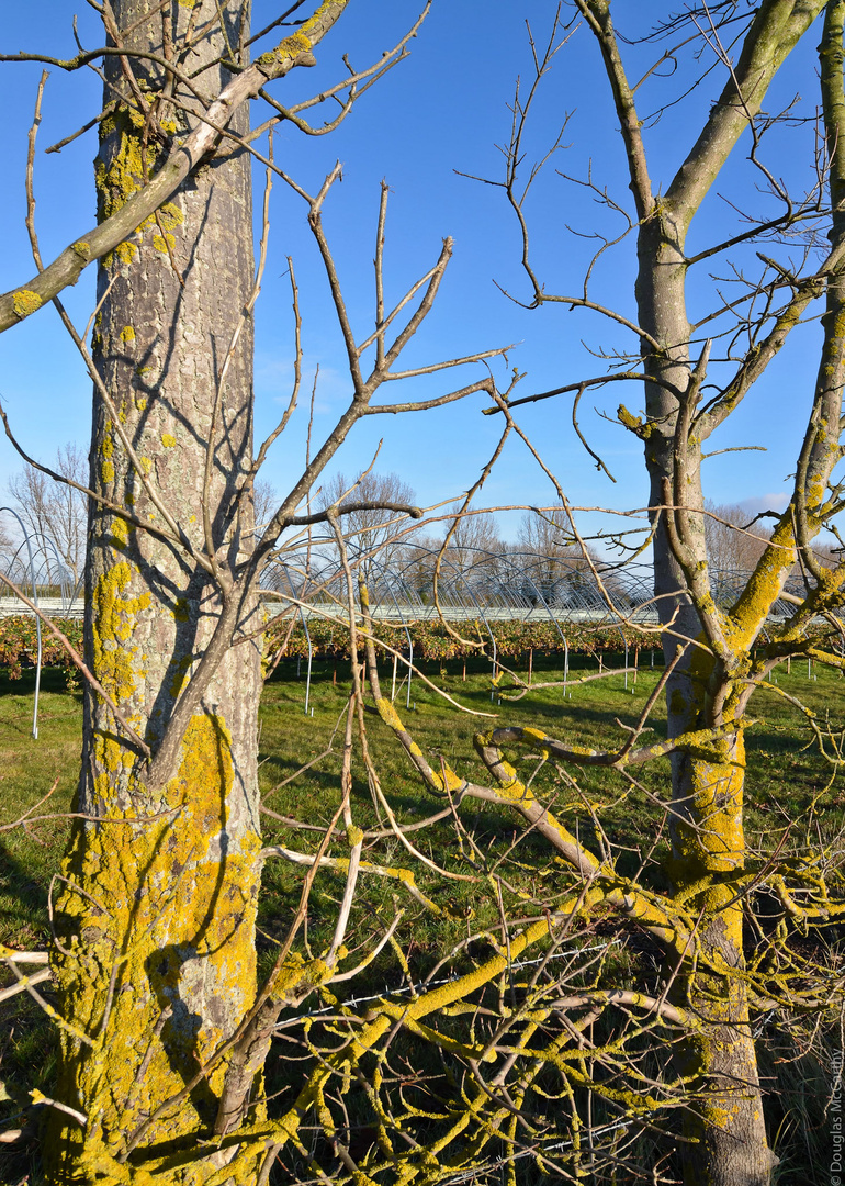 dmc_20111217_faversham_1769_DxO.jpg