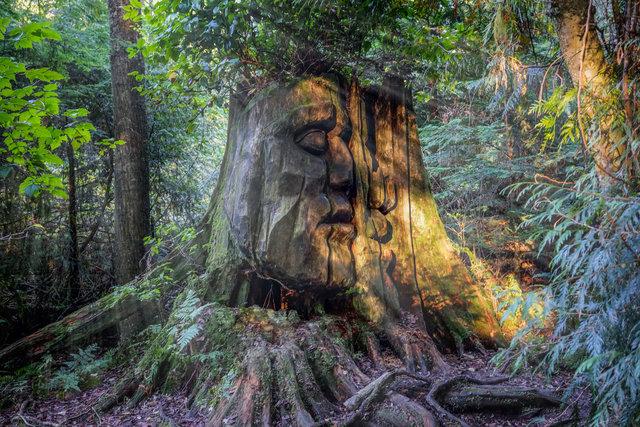sprit tree.jpg