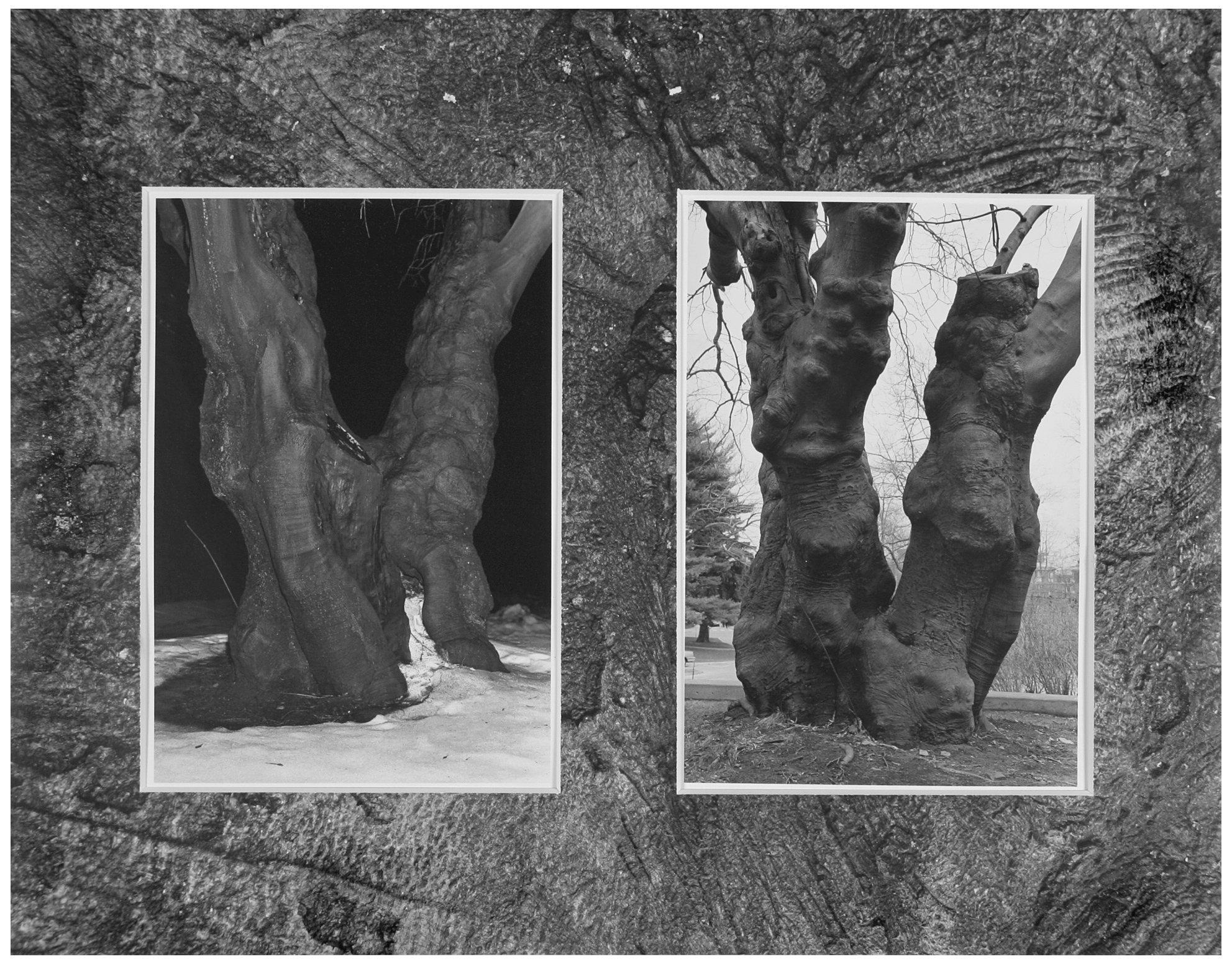 Trees  30.jpg