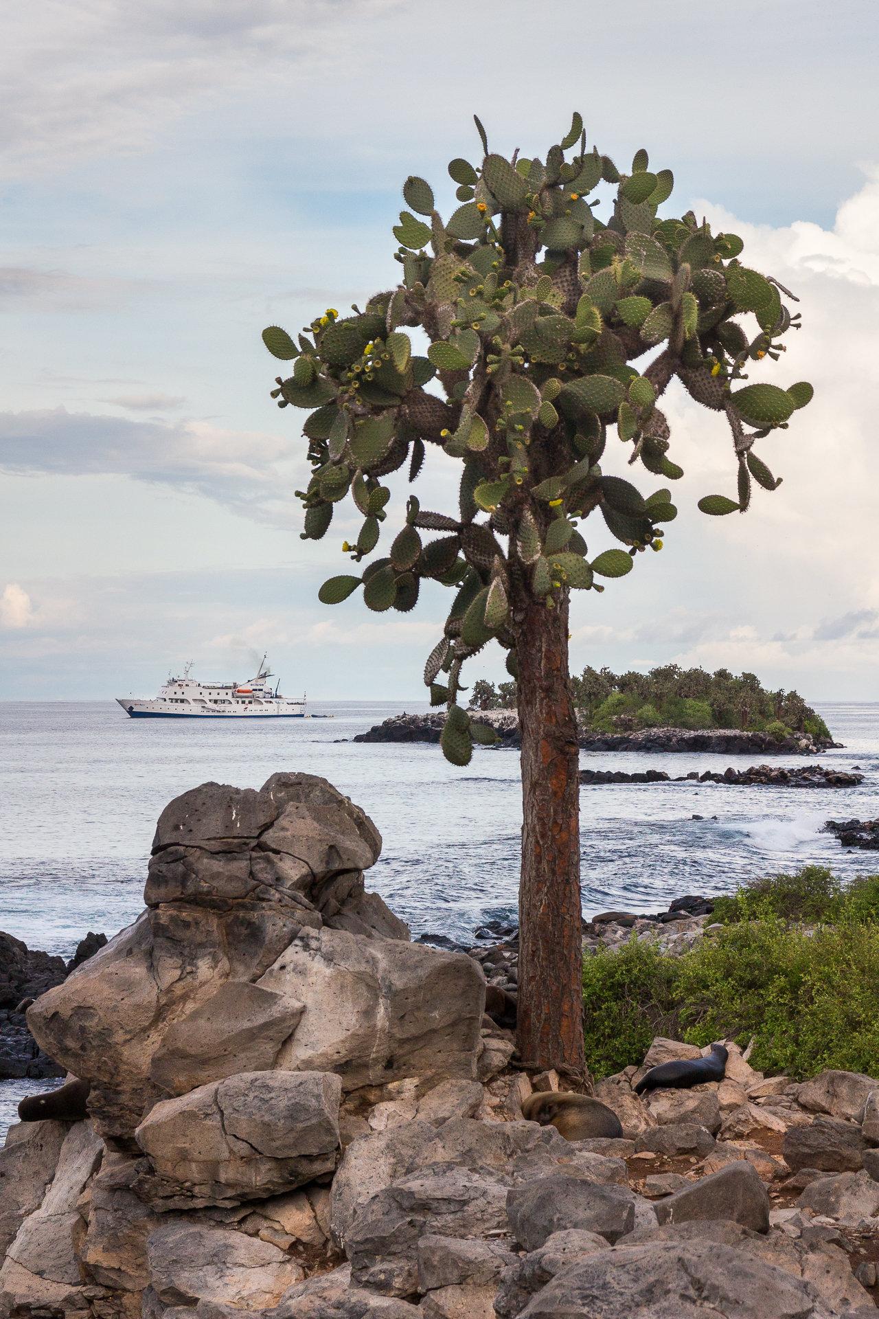 150419_Galapagos-1316.jpg