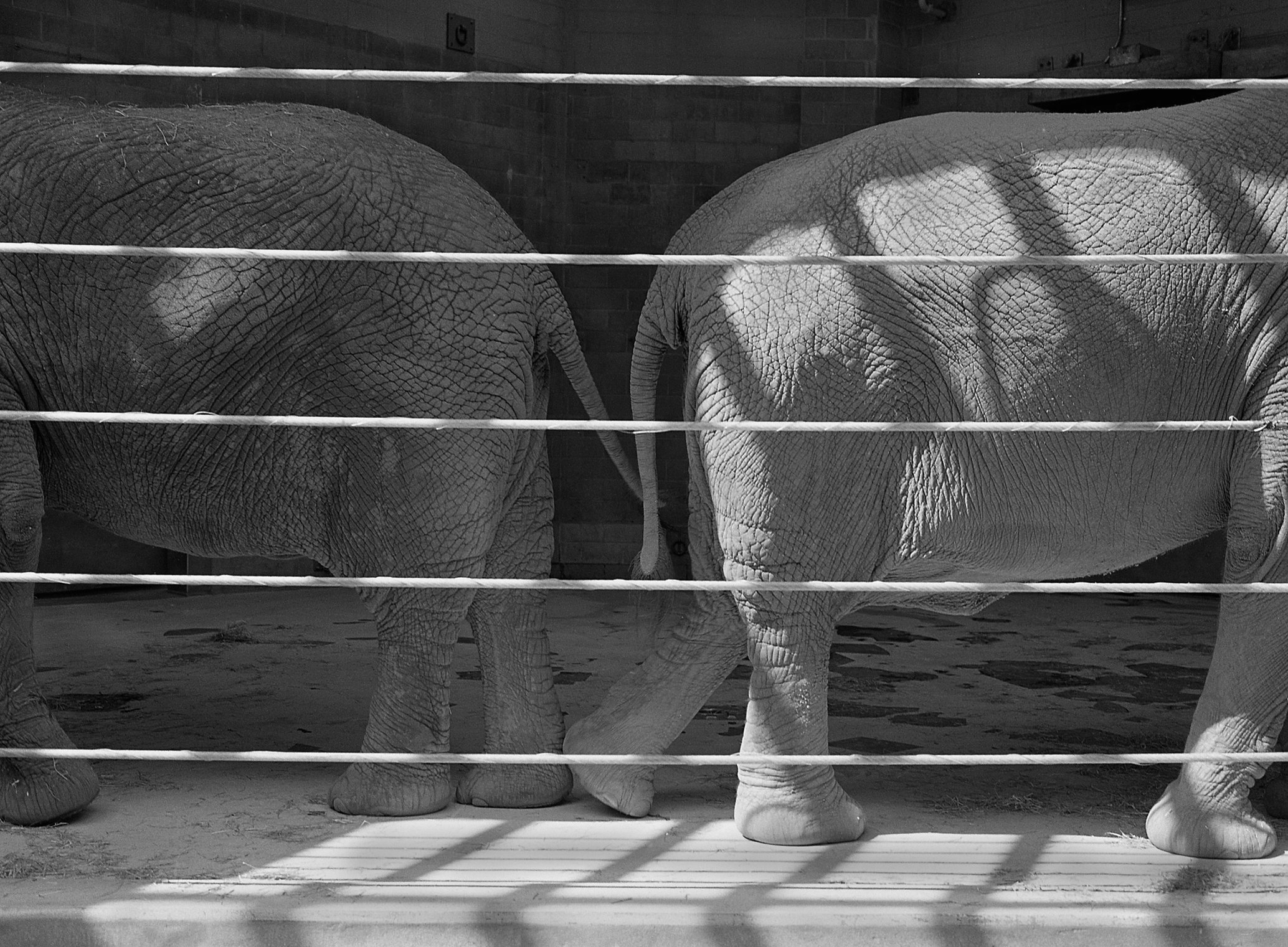#3  Elephant Forms Series