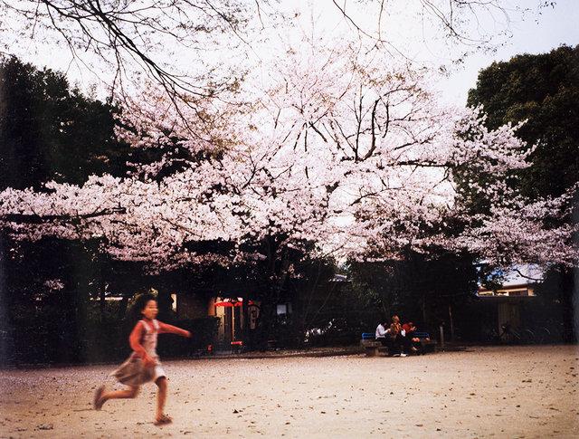 #6 Sakura Kyoto