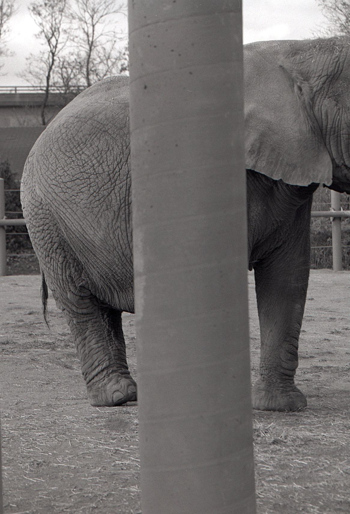 #10  Elephant Forms Series