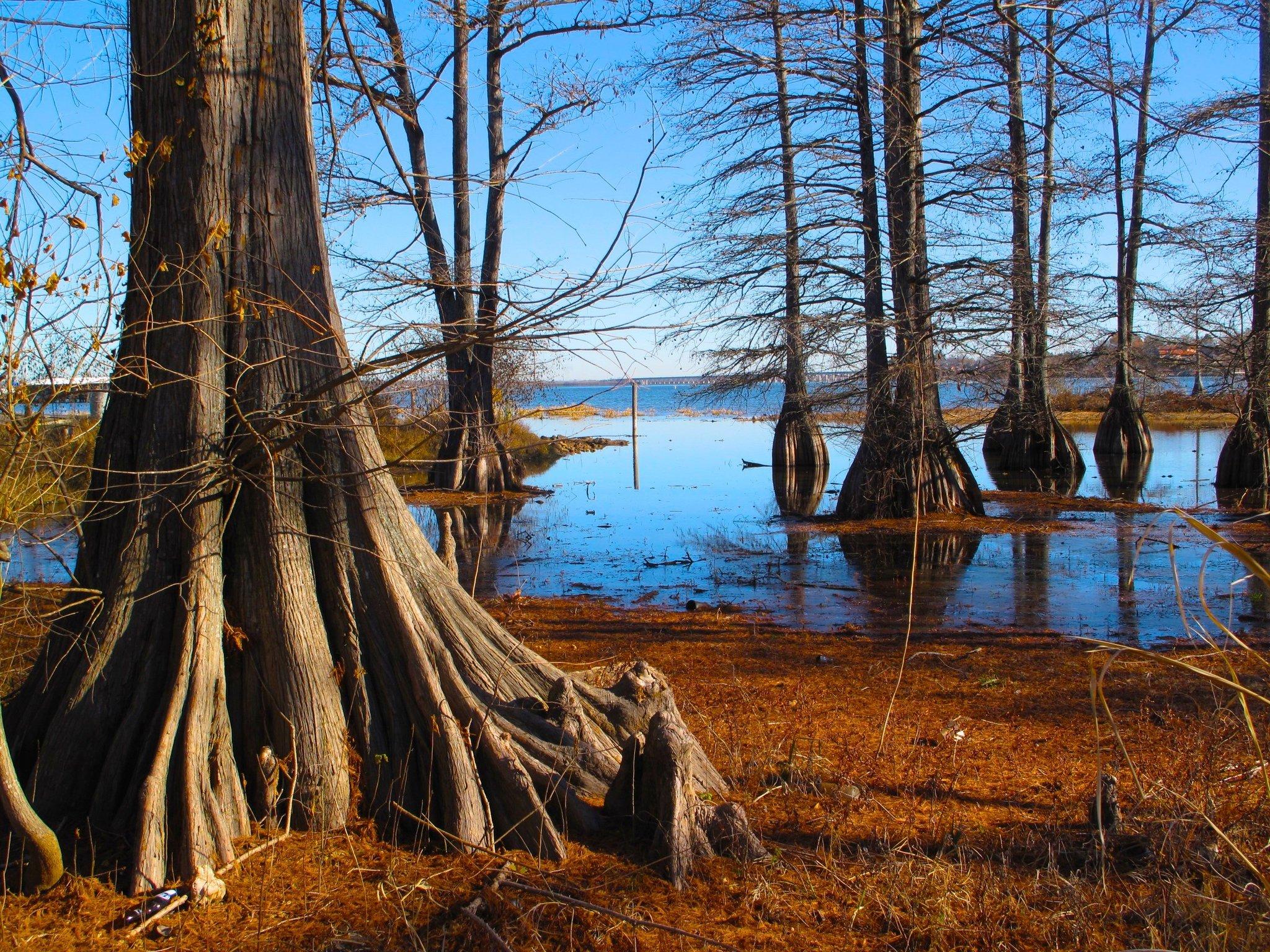 Shreveport Swamps