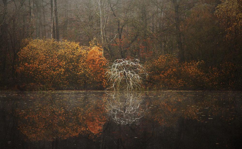 Pożegnanie jesieni, vigrafia 040