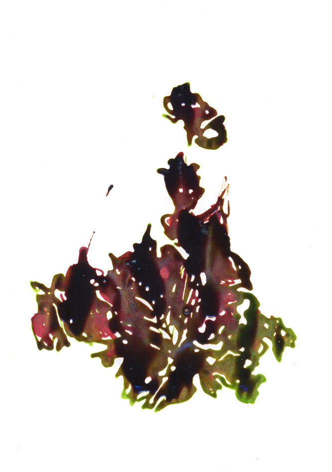 Une fleur s'envole