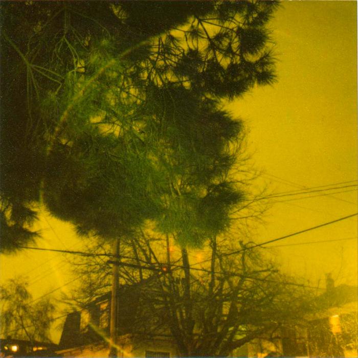 treeoutside.jpg