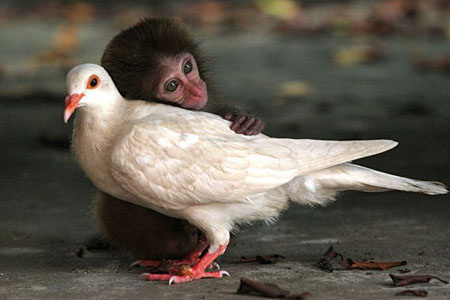 baby-monkey-with-pigeon-mom-icon-1.jpg