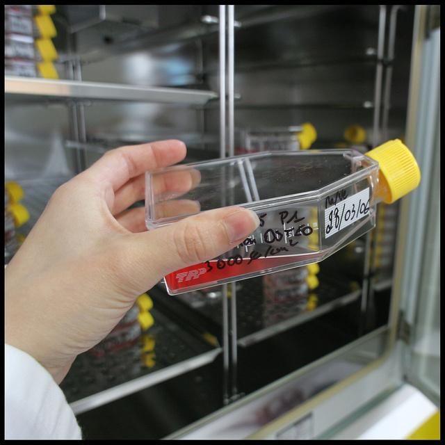 Centre de Transfusion Sanguine des Armées: département recherche sur les cellules souches