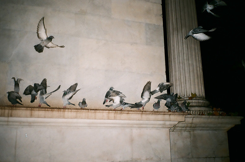 pigeons - marble arch.jpg