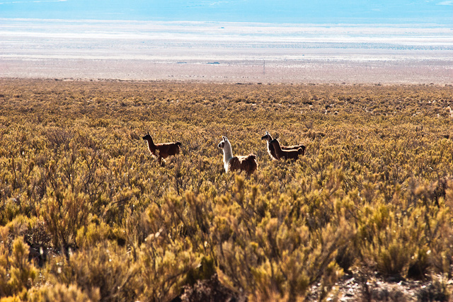 argentina-25.jpg