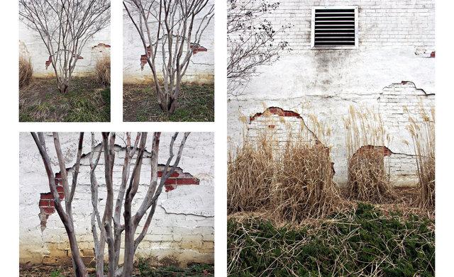 Three Trees and Wall.jpg