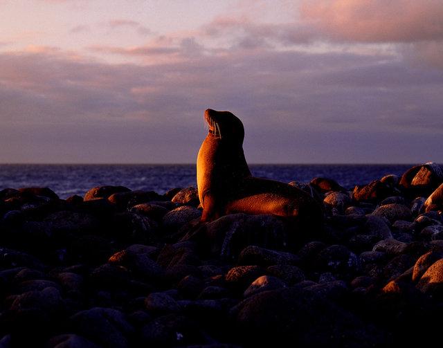 Galapagos_4.jpg
