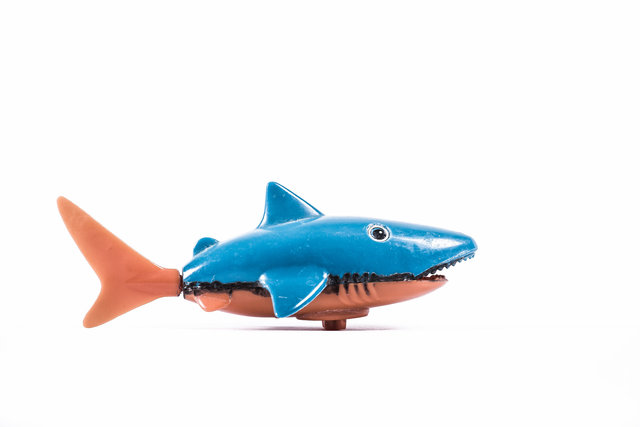 Le requin.jpg