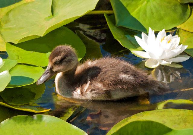 ducks-0946.jpg