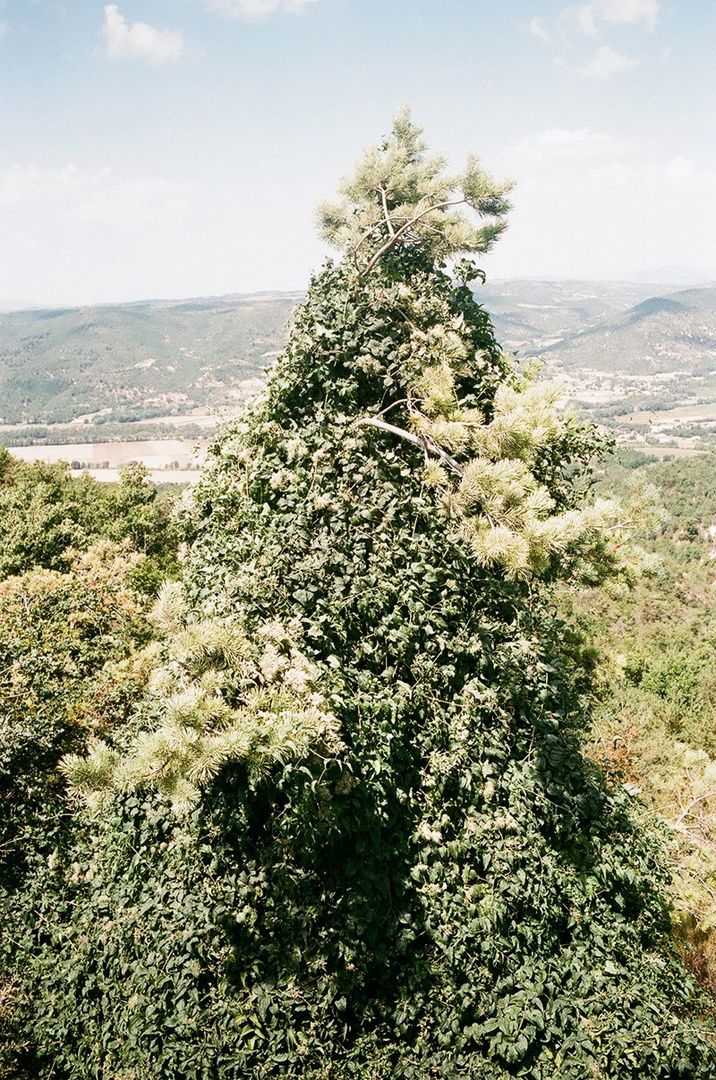 36_l'arbre-montagne.jpg
