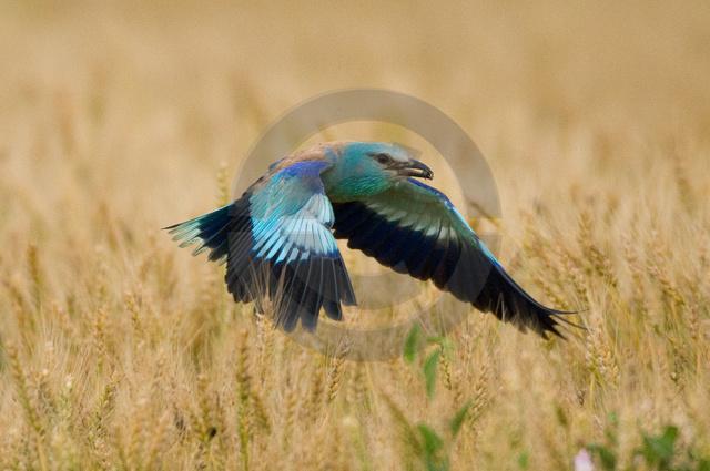 Tiere-Vögel-37.jpg