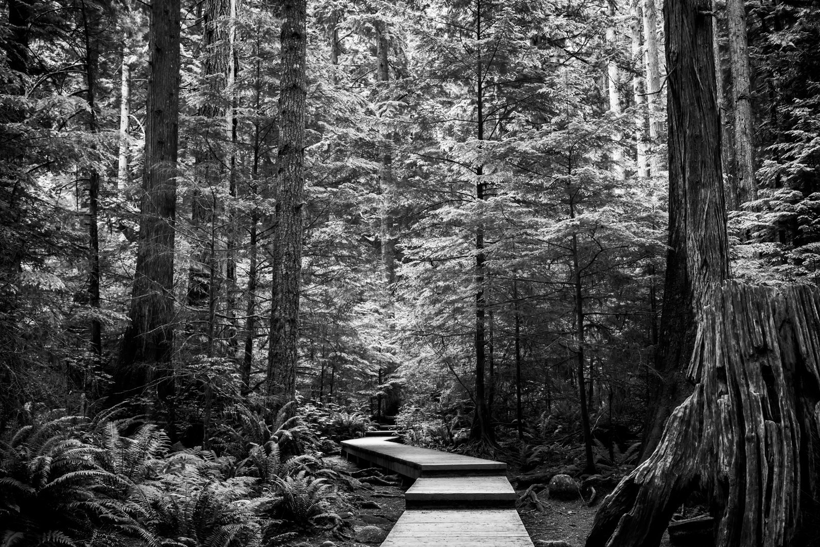 Lynn Canyon Park / Yoshi Yamamoto