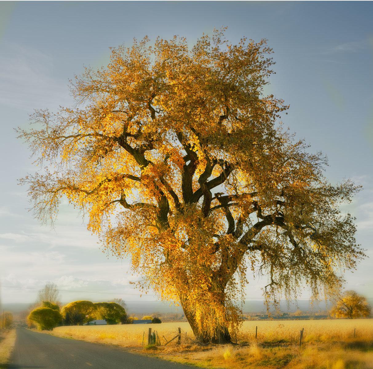 CottonwoodFalconRd_DSC1596-1.jpg