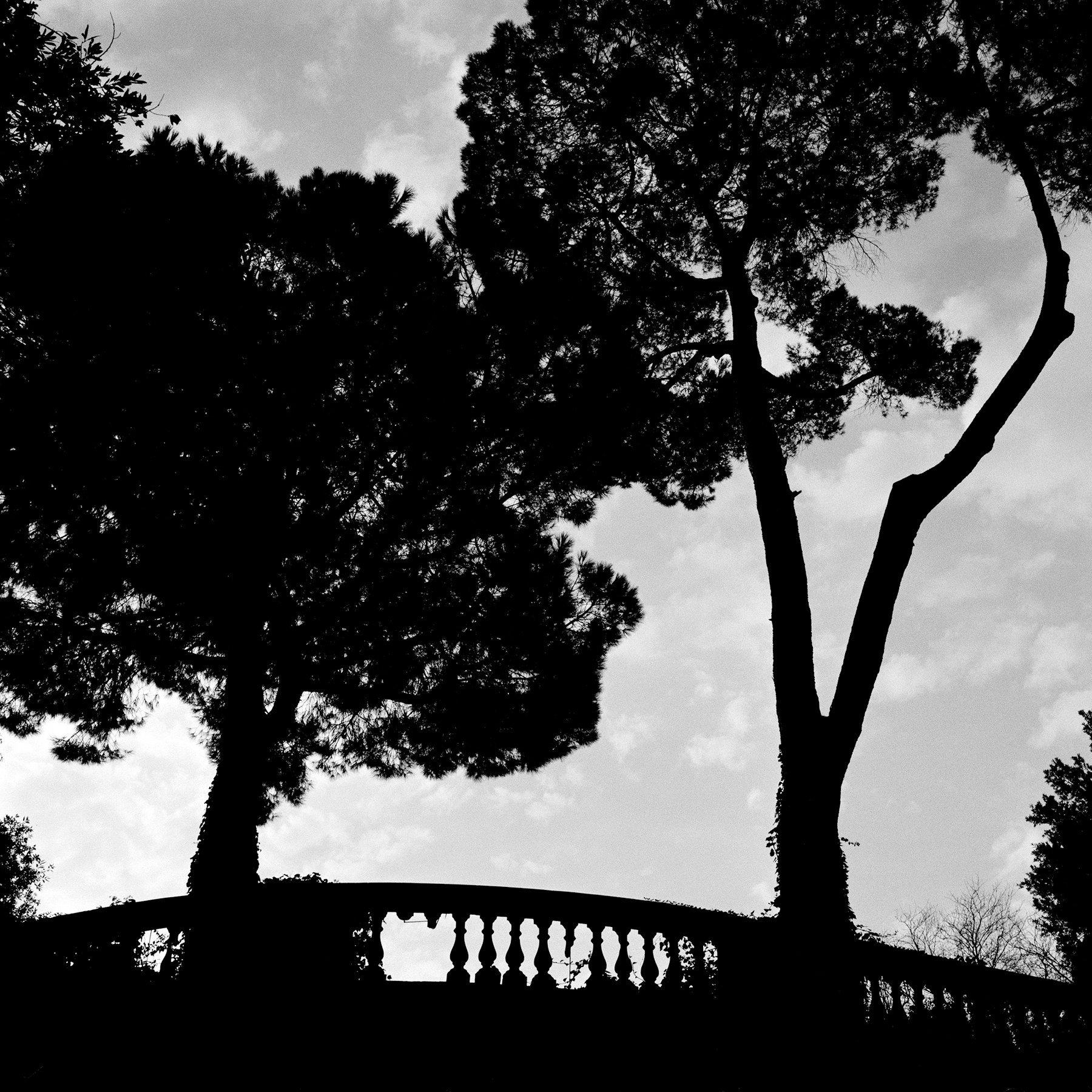 drevesa Roma 1.jpg