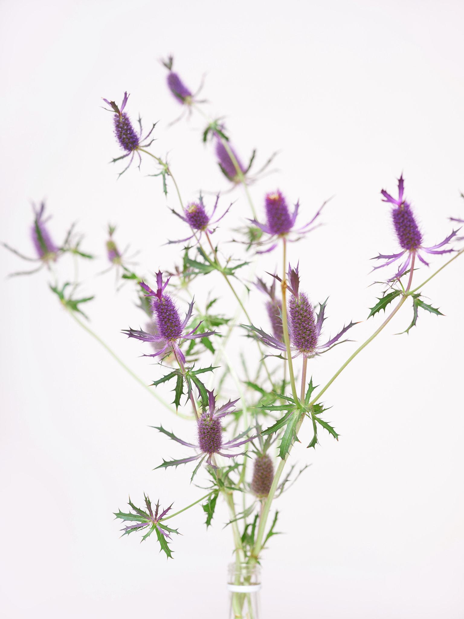 Flower_contius.jpg