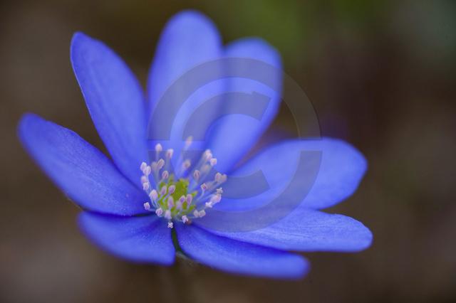 Pflanzen_Copyright_312.jpg