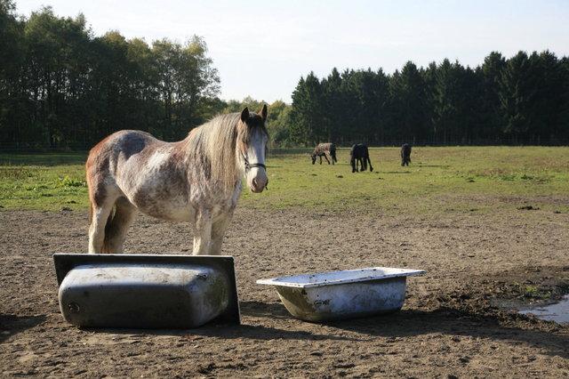 hobby paarden
