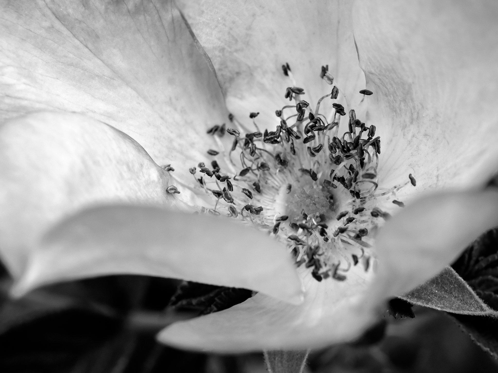 FlowerSproutsViewbook.jpg