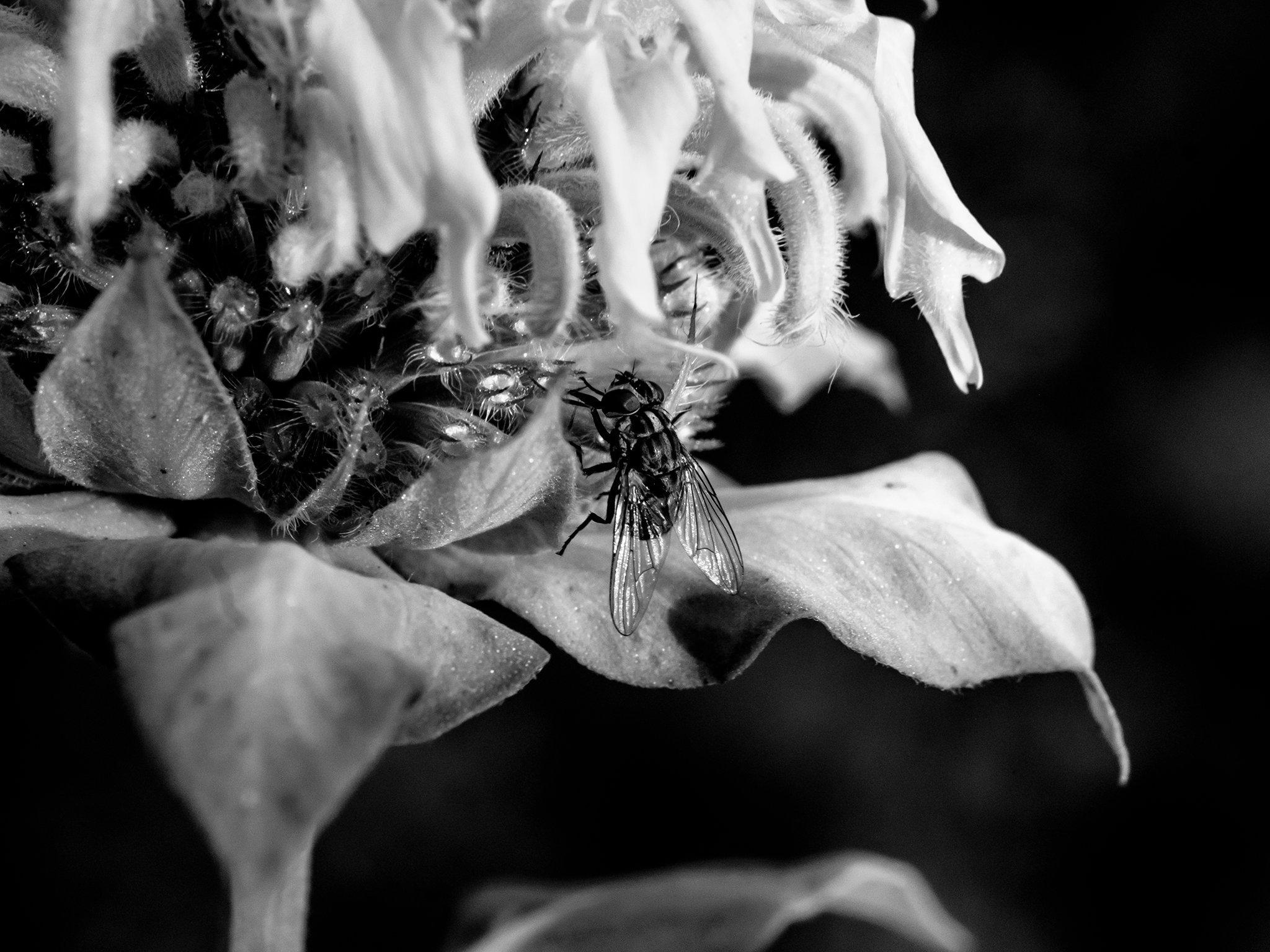 FlowerandFlyViewbook.jpg
