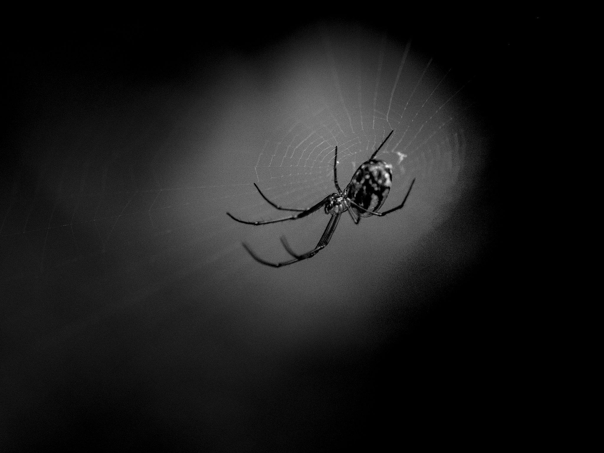 SpiderWeb2Viewbook.jpg