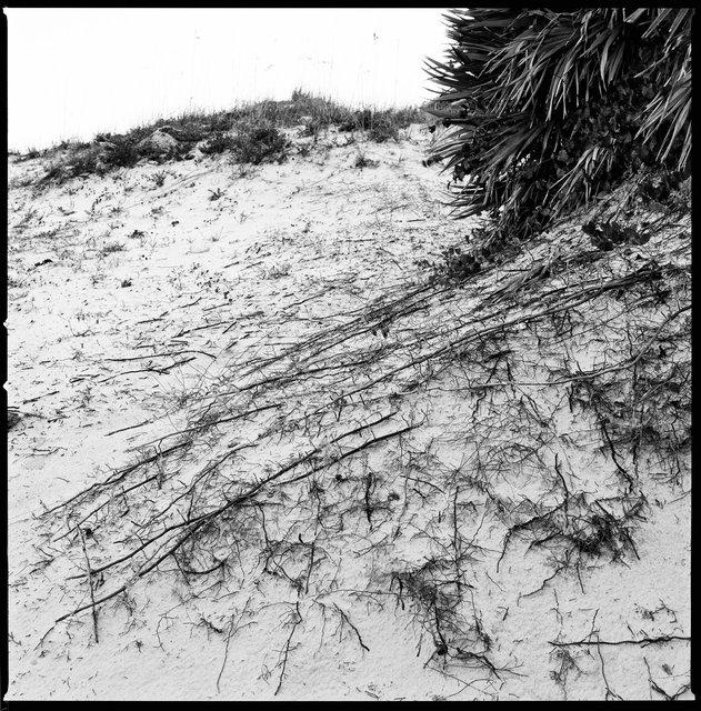 Secondary Dunes, South Cut Beach