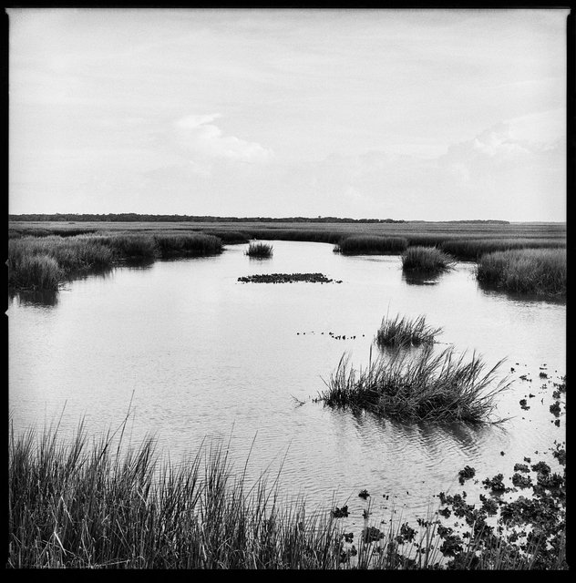 Marsh and Oyster Beds, South End