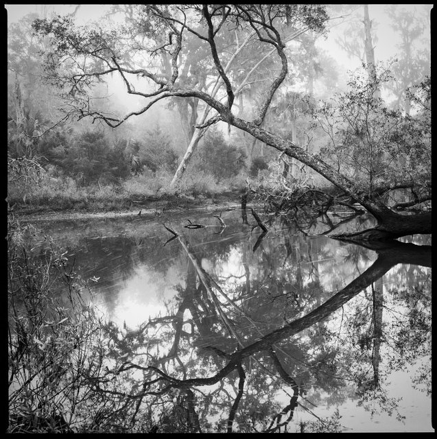 White Branch Tidal Creek, Wilderness Area