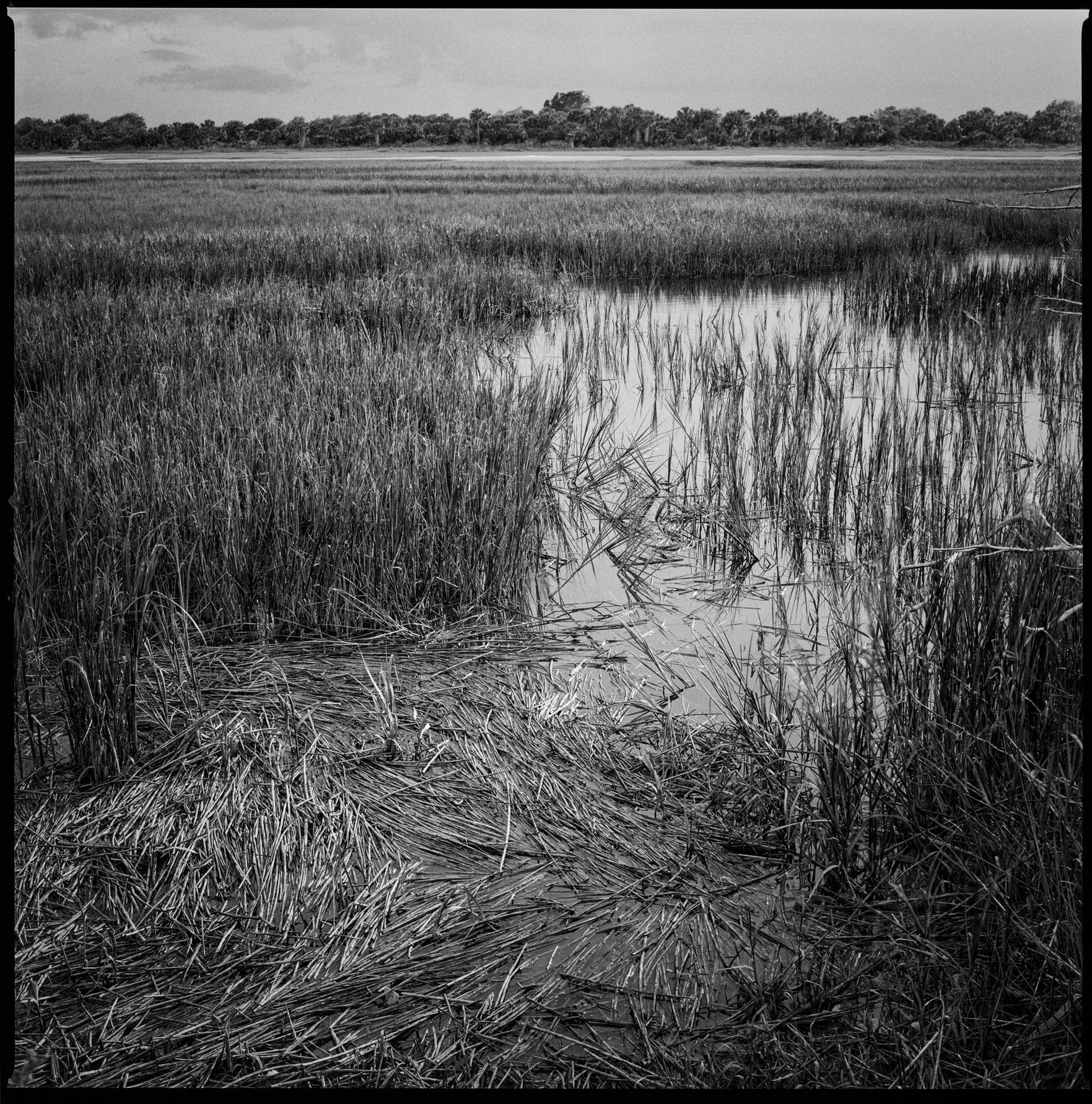 Marsh near Dungeness