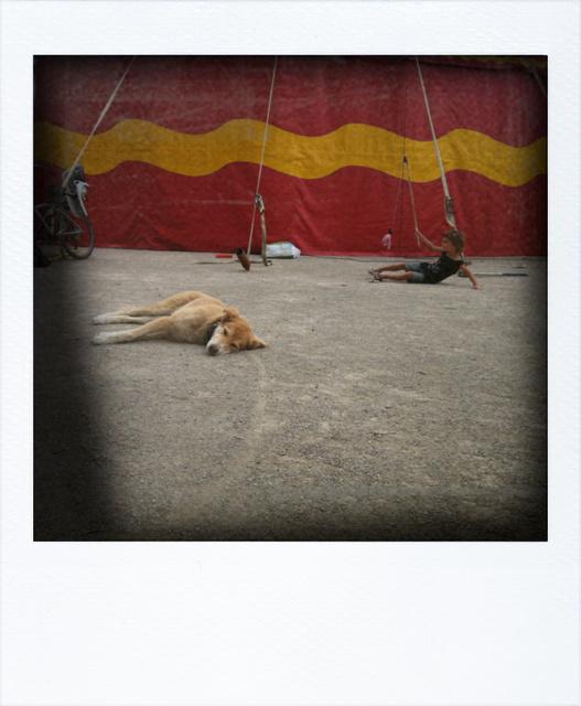 chalon strassenfestival , juli 2012