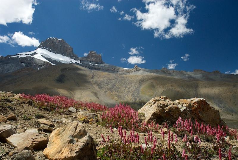 Ladakh_26.jpg