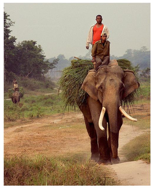 0013_nicolas-stipcianos-Chitwan-National-Park.jpg