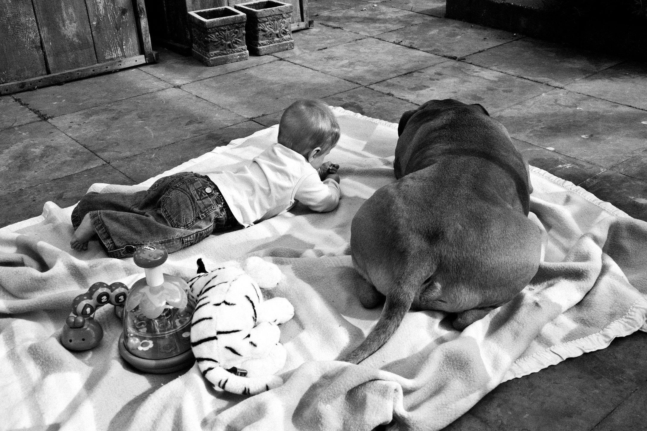 vechthonden (2).jpg