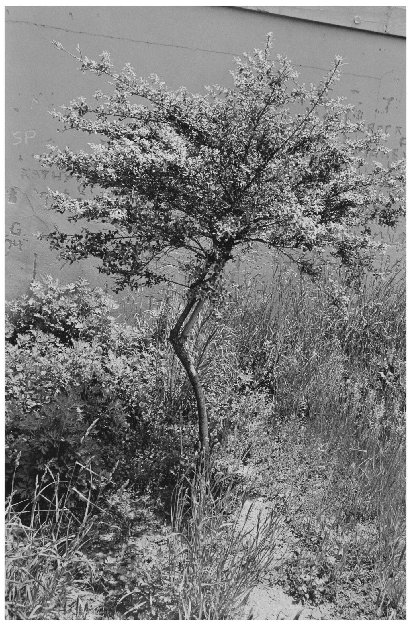 Trees  17.jpg