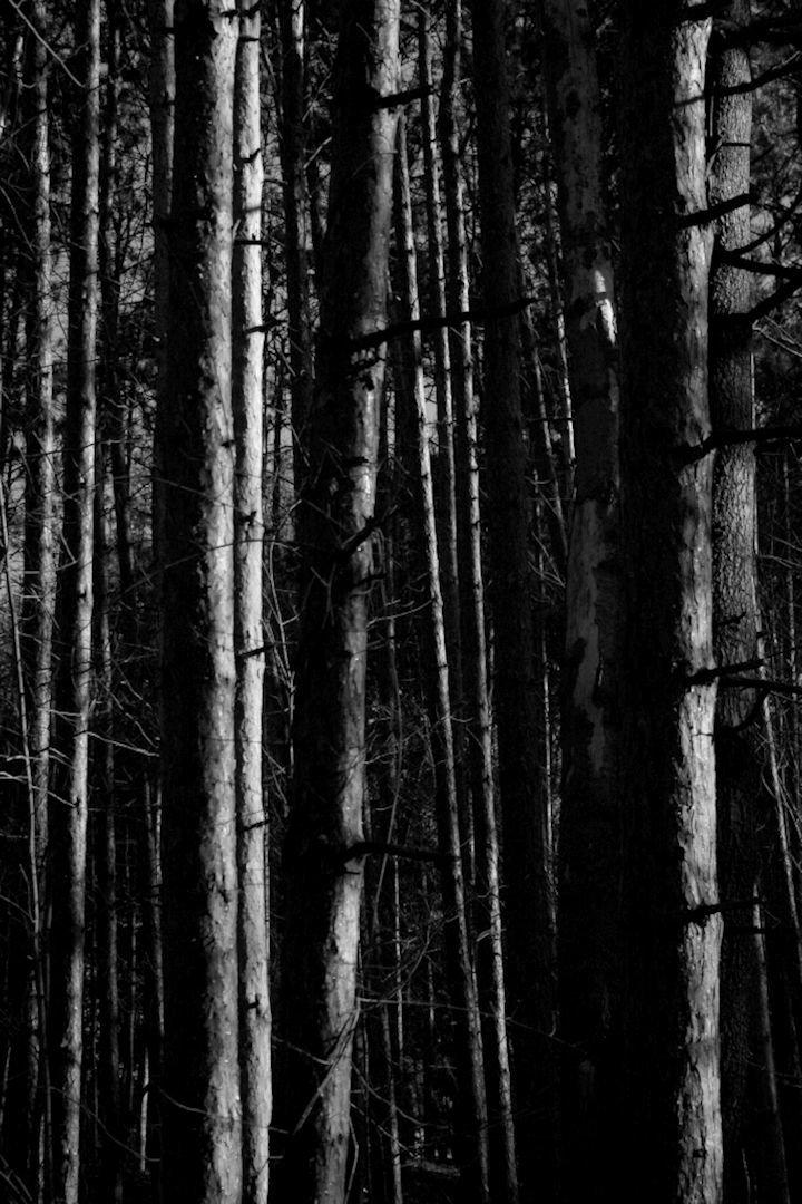 Trees_ (1).jpg