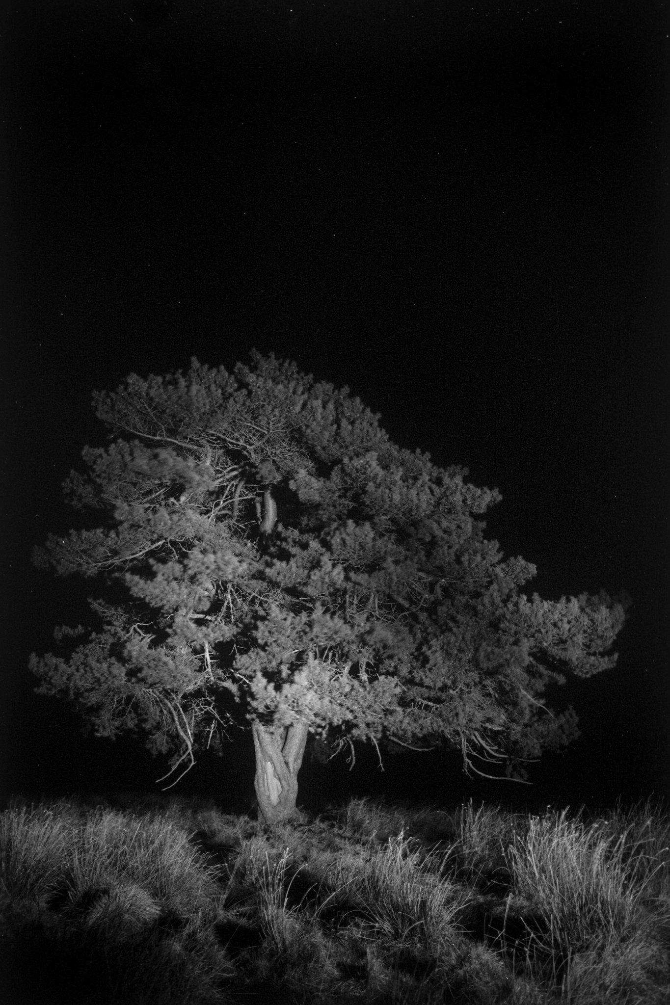 miguel brusch_through the night-02.jpg