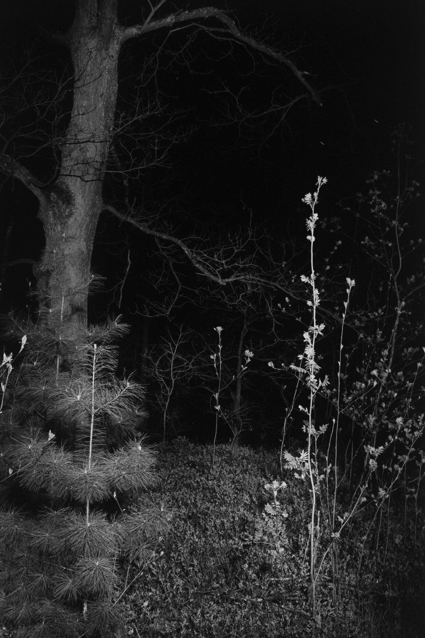 miguel brusch_through the night-03.jpg