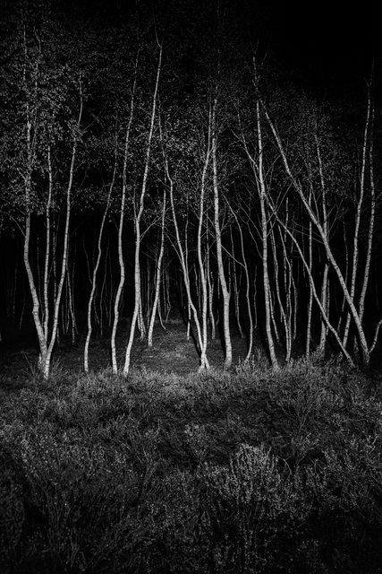 miguel brusch_through the night-01.jpg