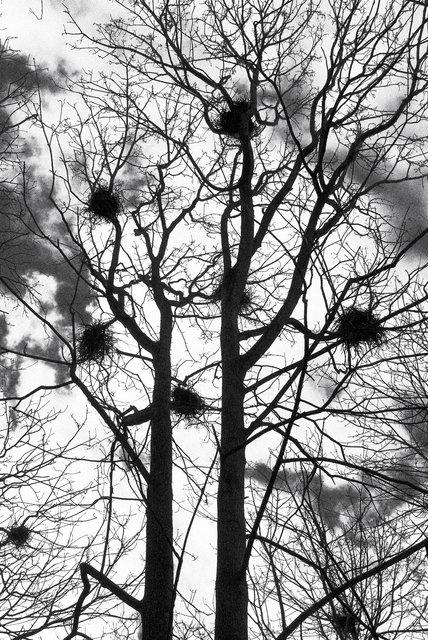 Tree-22bw.jpg