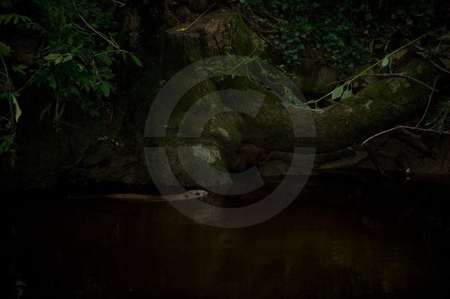 Tiere-Biber-9.jpg