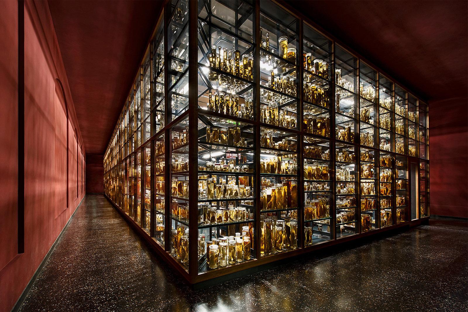 Museumsfotografie-Naturkundemuseum-Berlin-1.jpg